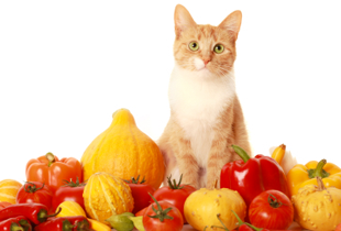Natural Cat vitamins & supplements: From P100