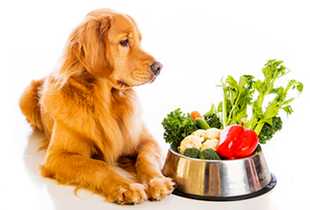Natural Dog vitamins & supplements: From P100