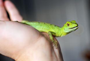 Reptile pet needs: Food, housing & more