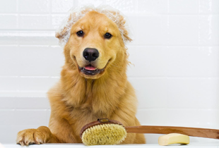 Pet Bathing needs: From P250