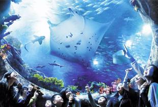 Ocean Park Hong Kong Ticket starts at P2,818 on Klook!