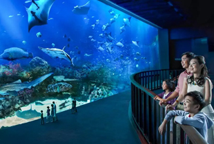S.E.A. Aquarium Ticket Sentosa Singapore starts at P1,372 on Klook!