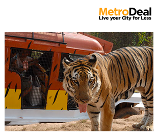 50% Off: Day Tour at Zoobic Safari