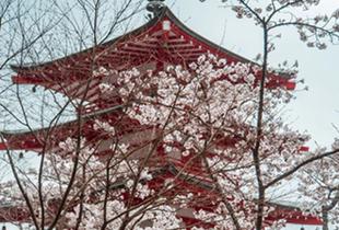 Klook Cherry Blossom Voucher
